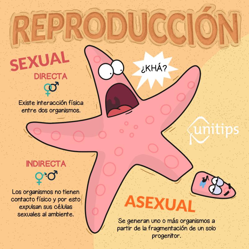 Variantes basicas de reproduccion asexual de las plantas