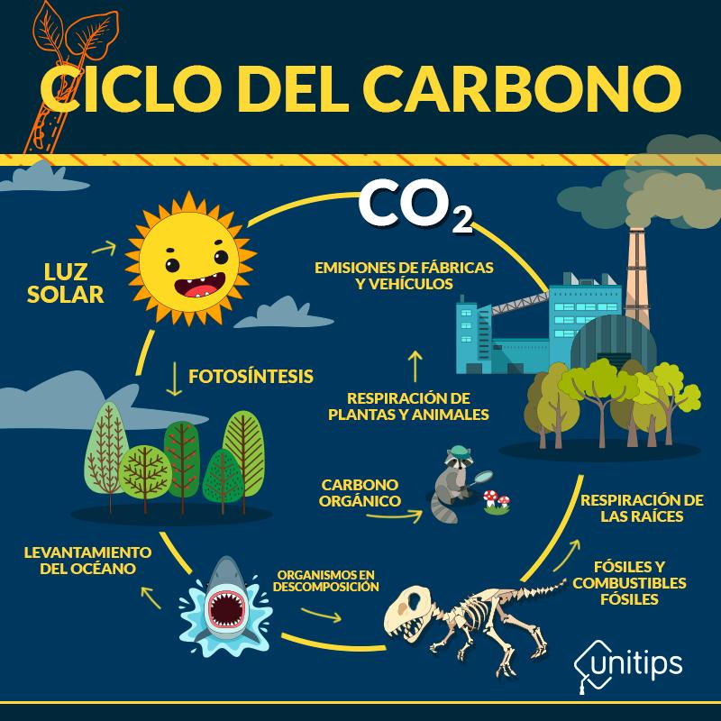 CICLO-DEL-CARBONO
