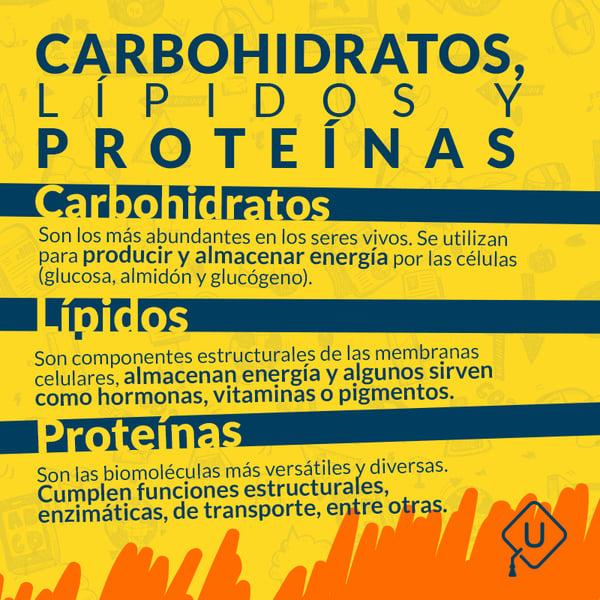 Carbohidratos,-lípidos-y-proteínas