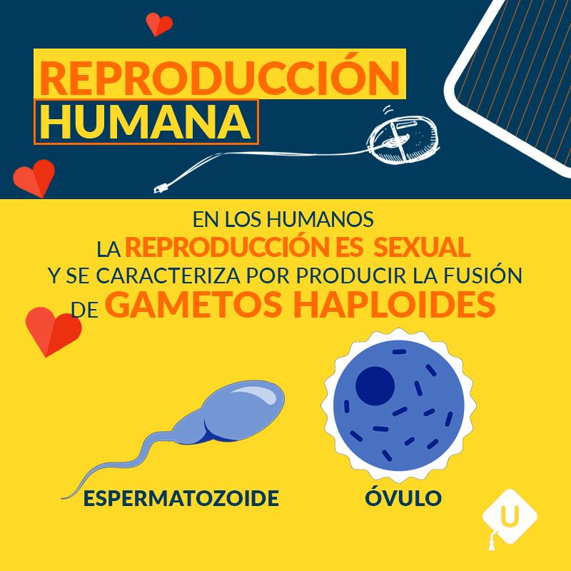I_INT_REPRODUCCION HUMANA-1