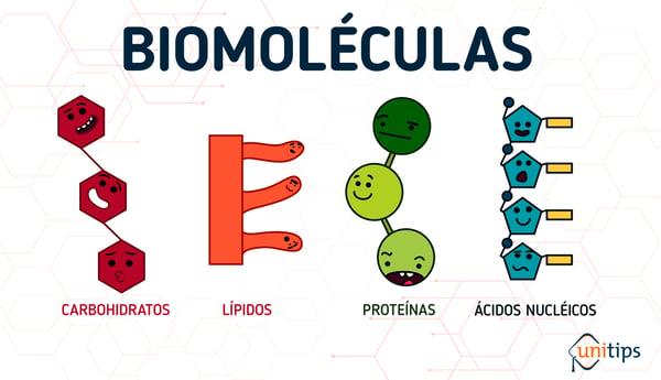 biomoléculas_INTERNA