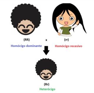 Ejemplo de homócigo dominande, homócigo recesivo y heterócigo