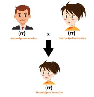 Ejemplos de Homocigoto recesivo