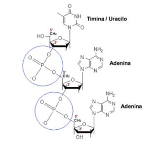 Herencia: Unidades y estructura molecular