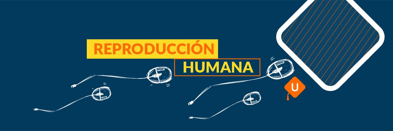 Reproducción humana | Guía IPN